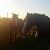 Osage Clydesdales & Stock Farm