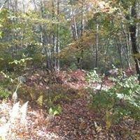Mass Audubon Burncoat Pond Wildlife Sanctuary