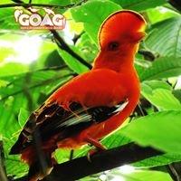 Grupo de Observadores de Aves del Guaviare