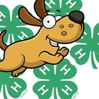 Ingham County 4H Dog Project