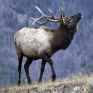 Kinderhook Elks Lodge #2530