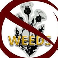 Carson City Weed Coalition