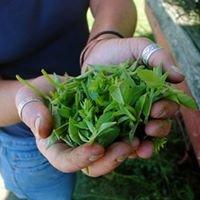 Little River Herb Farm