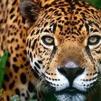 WWU Wildlife Conservation Corps