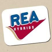 Rea Hybrids