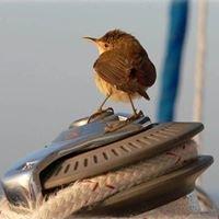 Yachtfinders Windseakers