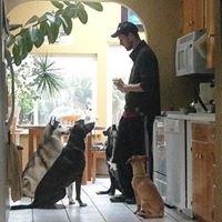 Paw Prints Seattle Dog Walking and Pet Sitting
