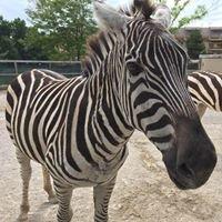 Safari Adventures Animal Park