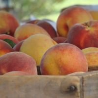 Union Lake Peach Orchard