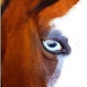 Horses Healing Heroes