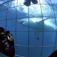 Shark Cage Diving Cape Town