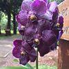 Botanical Orchid Garden La Garita
