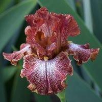 Magic Valley Iris Society