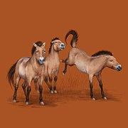 Návrat divokých koní / Return of the Wild Horses