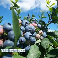 Childs Blueberries