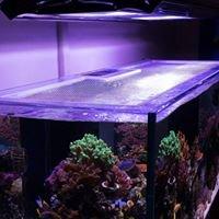 Incredible Corals & ArtFully Acrylic