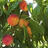 Eagle Creek Orchard