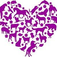Fiona Paul Animal Healing