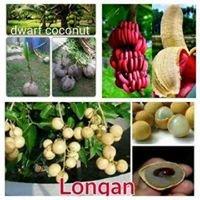 LYN's Grafted fruit & Dwarf coconut