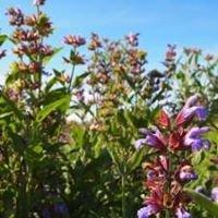 Sage Rising Herbs