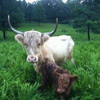 Solace Farm Homestead