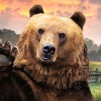 Big Bear Tires and Wheels