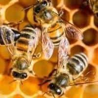 Susquehanna Beekeepers Association