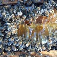 Northwest Ohio Beekeepers Association