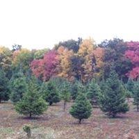 Christmas Tree Lane Wallkill, NY 12589