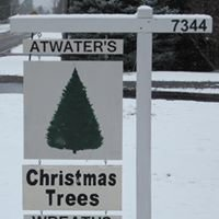 Atwater's Christmas Trees
