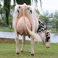 Liddleholme Holsteins