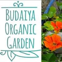 Masso's Budaya Organic Garden