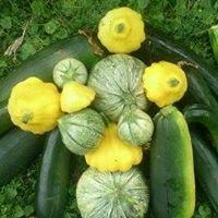 Trent Vegetable Gardens