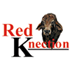 Red Knection K Bulls