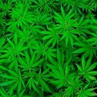 Spokane Weed Stores