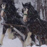 Regal Horse & Carriage