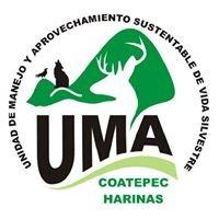 UMA Coatepec Harinas