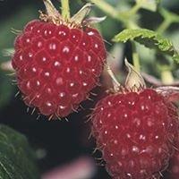 Raspberry Attic Salon