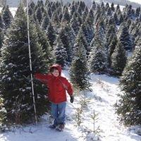 Watauga County Christmas Tree Association - Choose & Cut farms