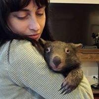 Amaroo Wildlife Shelter