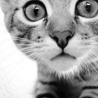 Kitty Klinic