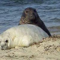 Experiencing Wildlife:  Cape Cod & Nantucket