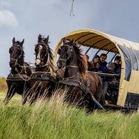Puur Terschelling Paardrijden en Huifkartochten
