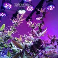 Leds Growing Green