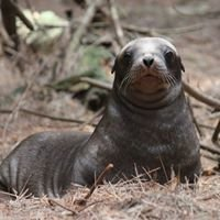 New Zealand Sea Lion Trust
