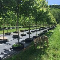 Wolf Tree Farms