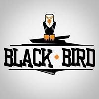 Estudio Black Bird