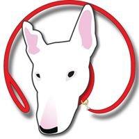 Captain Spish, Dog/Animal Behavior consultant