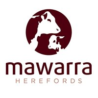 Mawarra Herefords
