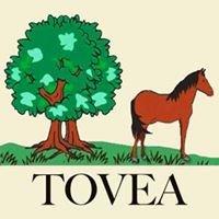 Twin Oaks Valley Equestrian Association